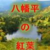 岩手10月~の紅葉 イベント情報八幡平!