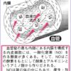 ノーベル賞授賞 の血管若返り物質 NO!