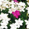 春の花 知りたい花の名前がわかる情報Ⅲ