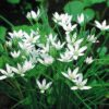 🌷花の事典 春の花の名前がわかります🌷