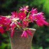 春の花 知りたい花の名前がわかる情報Ⅴ