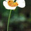 🌺春の花 知りたい花の名前がわかる情報Ⅹ