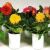 🌺春の花 知りたい花の名前がわかる情報Ⅸ