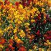 春の花 知りたい花の名前がわかる情報ⅵ