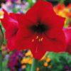 春の花 知りたい花の名前がわかる情報Ⅳ