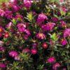 春の花 知りたい花の名前がわかる情報