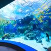 めんそーれ沖縄美ら海水族館の観光情報!